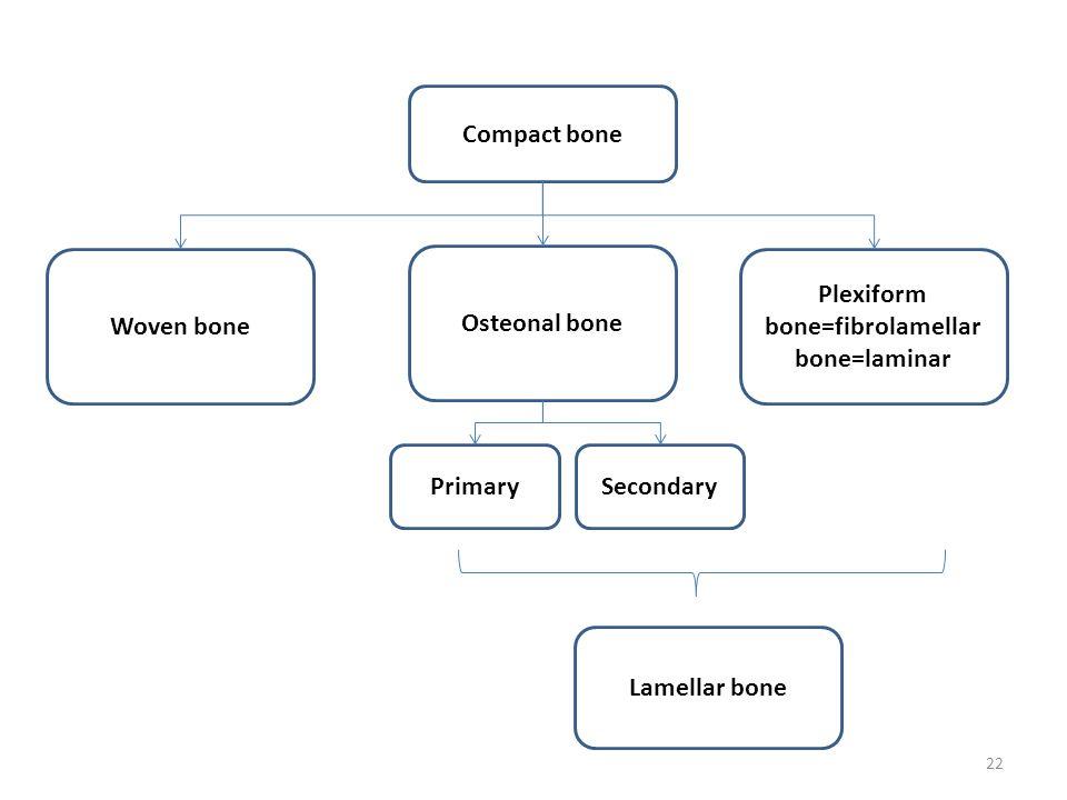 Plexiform bone=fibrolamellar bone=laminar