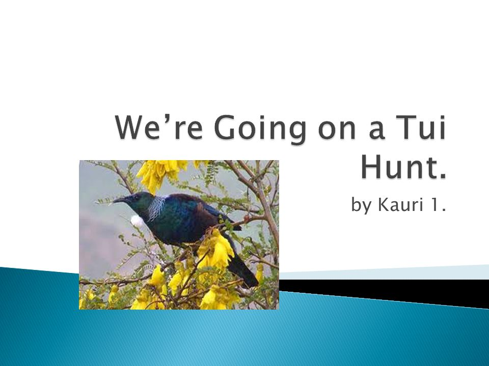 We're Going on a Tui Hunt.