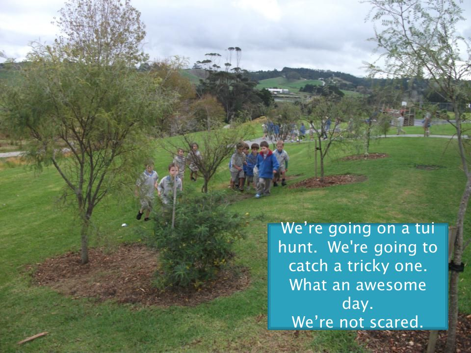 We're going on a tui hunt. We re going to catch a tricky one