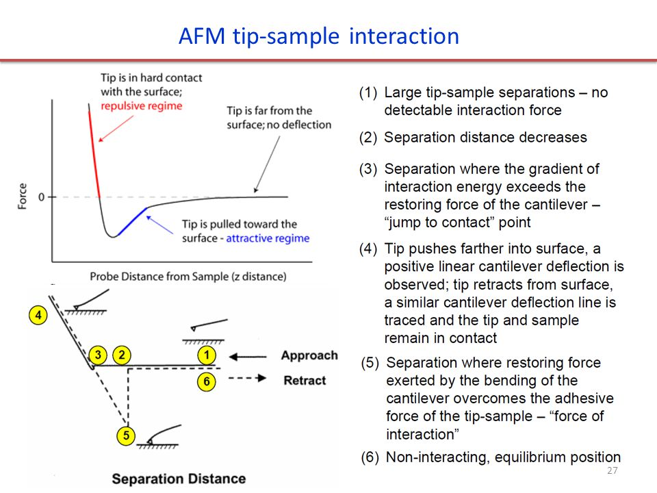 AFM tip-sample interaction