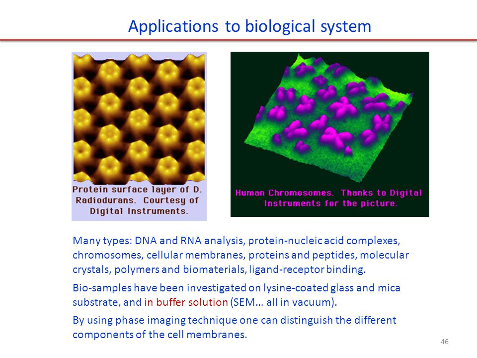 Applications to biological system