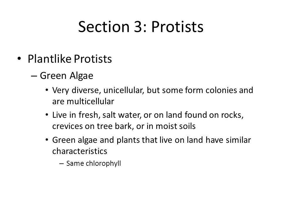 Section 3: Protists Plantlike Protists Green Algae