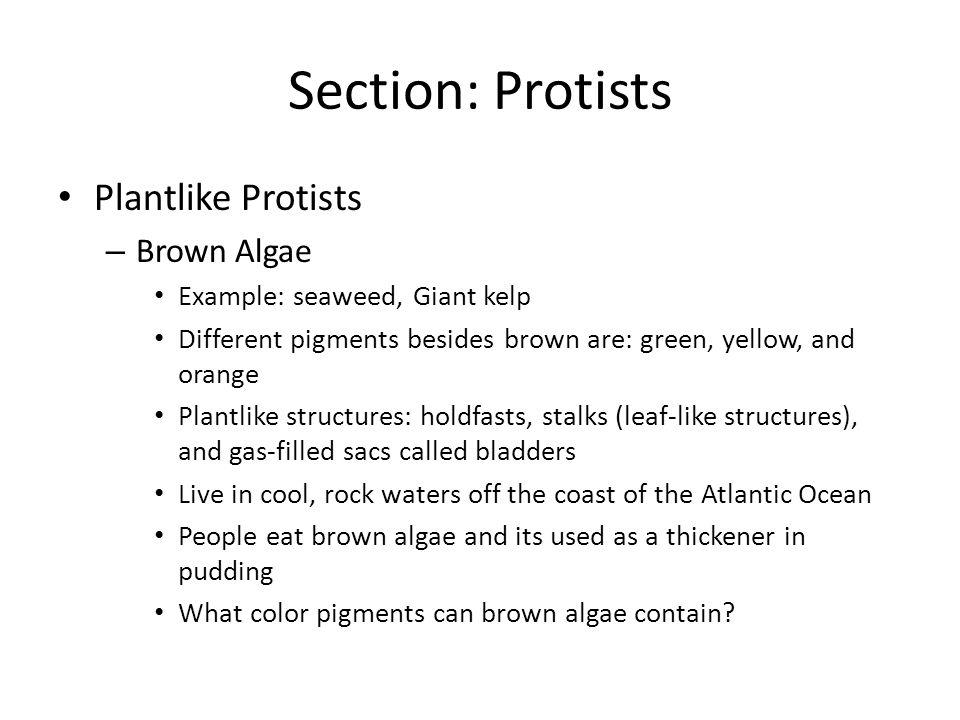 Section: Protists Plantlike Protists Brown Algae