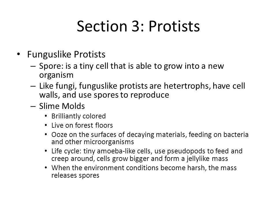 Section 3: Protists Funguslike Protists