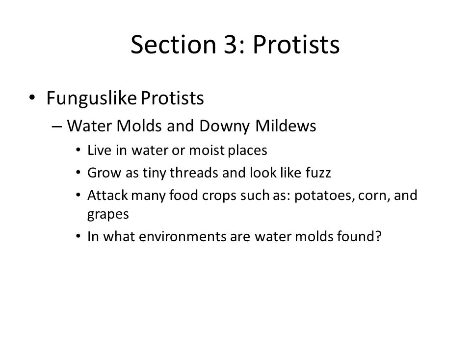 Section 3: Protists Funguslike Protists Water Molds and Downy Mildews