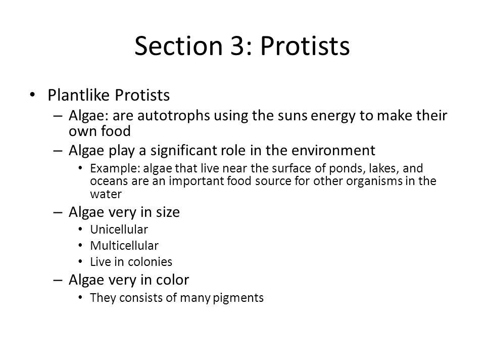 Section 3: Protists Plantlike Protists