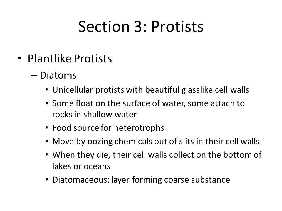 Section 3: Protists Plantlike Protists Diatoms