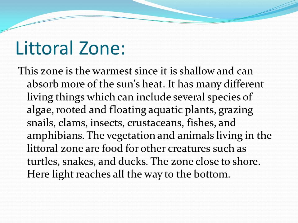 Littoral Zone: