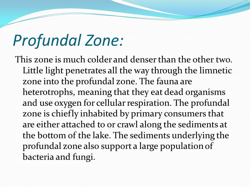 Profundal Zone: