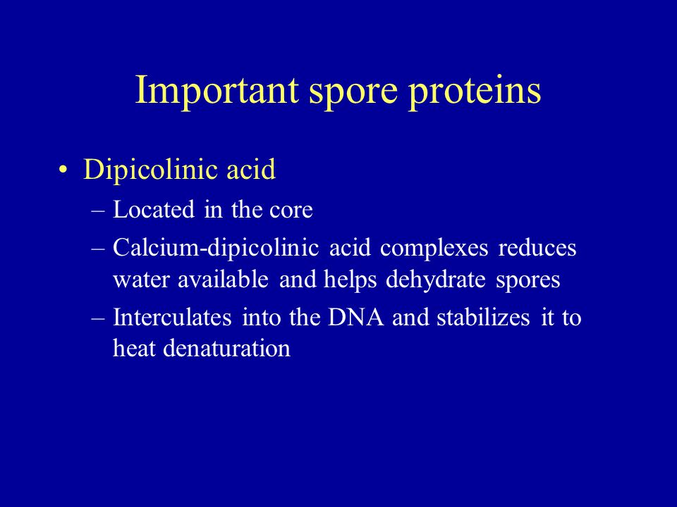 Important spore proteins