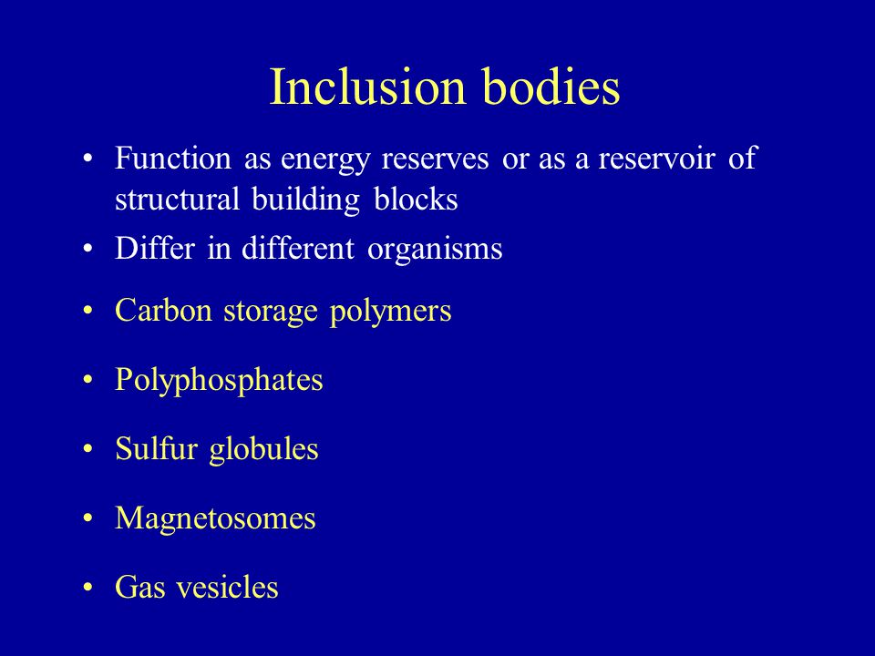 Inclusion bodies Function as energy reserves or as a reservoir of structural building blocks. Differ in different organisms.