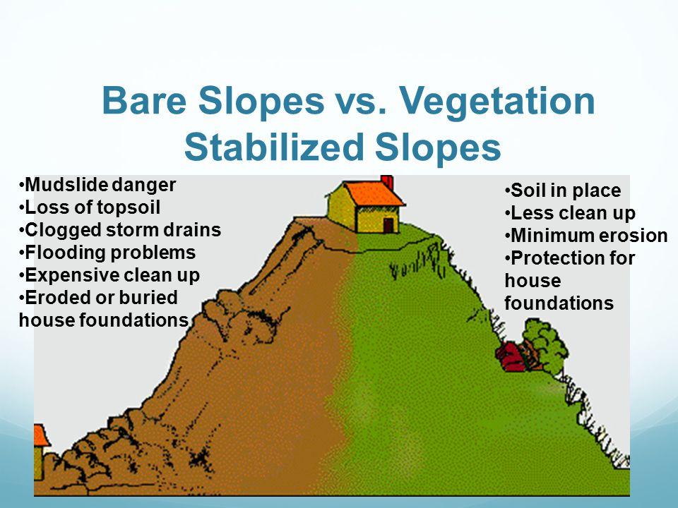 Bare Slopes vs. Vegetation Stabilized Slopes
