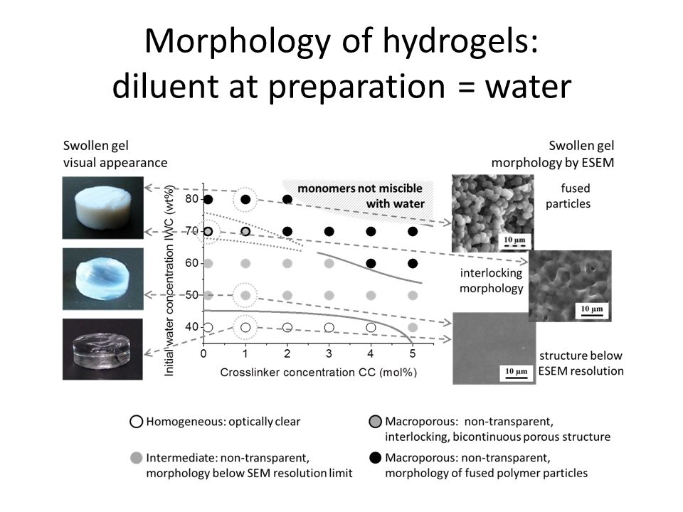 Morphology of hydrogels: diluent at preparation = water