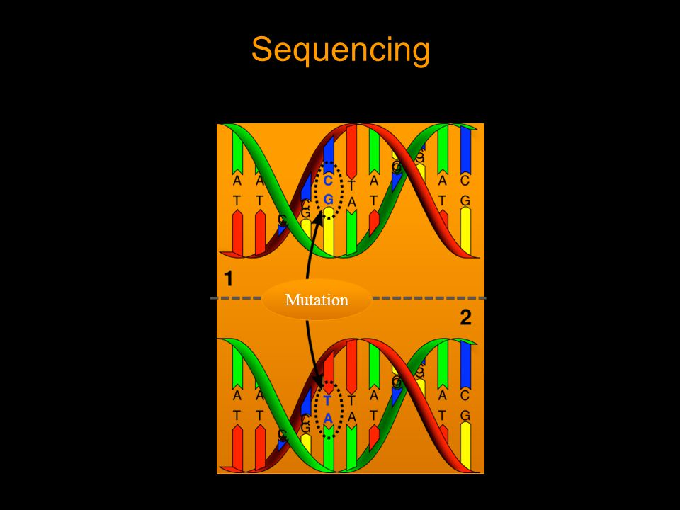 Sequencing Mutation
