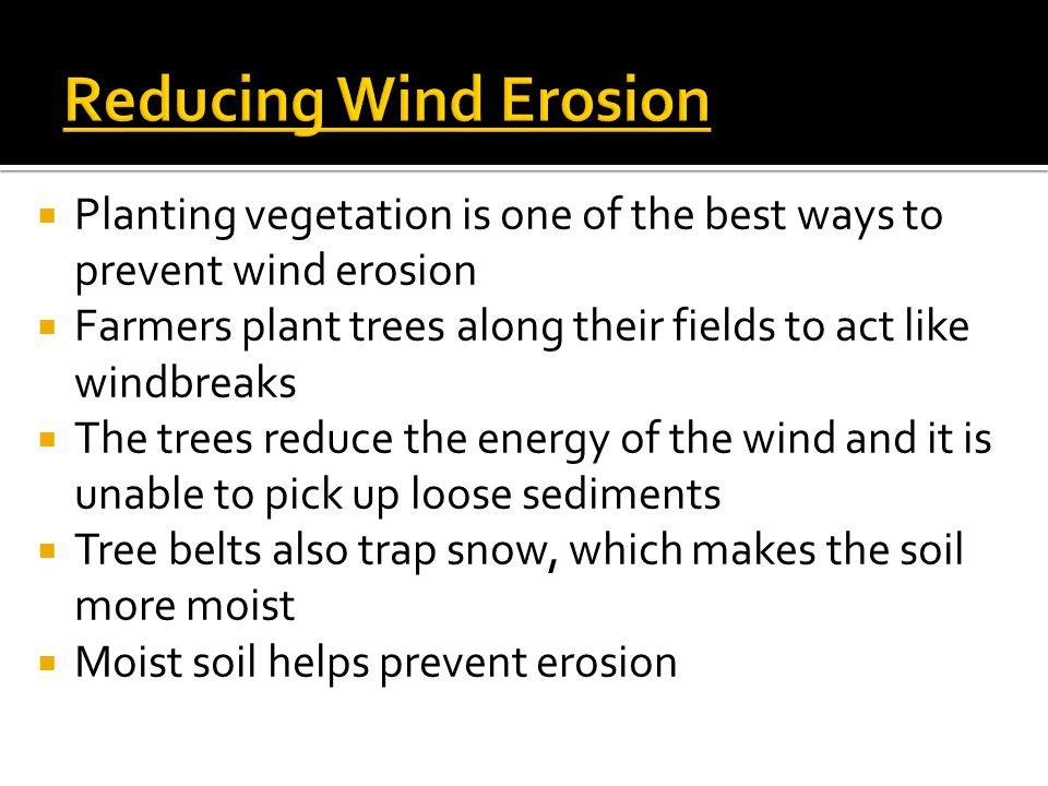 Reducing Wind Erosion Planting vegetation is one of the best ways to prevent wind erosion.