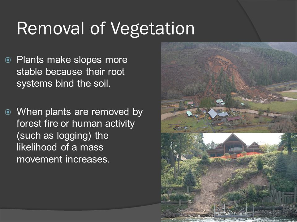 Removal of Vegetation Plants make slopes more stable because their root systems bind the soil.
