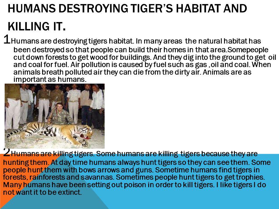 HUMANS DESTROYING TIGER'S HABITAT AND KILLING IT.
