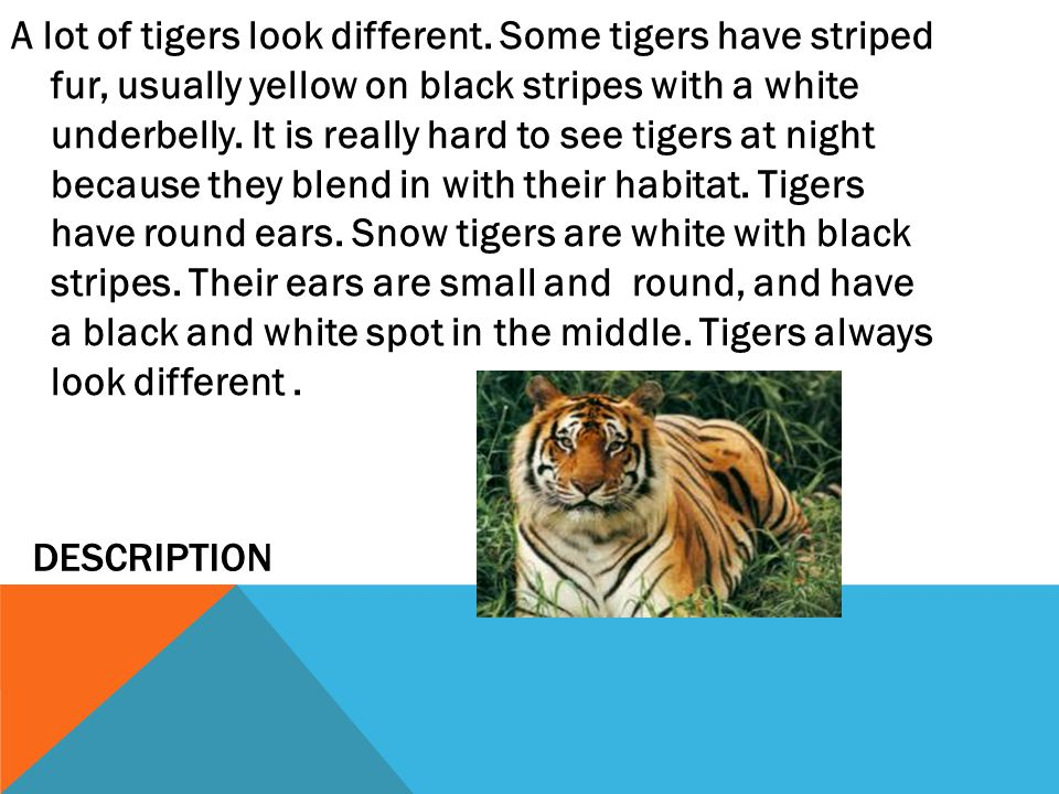 A lot of tigers look different