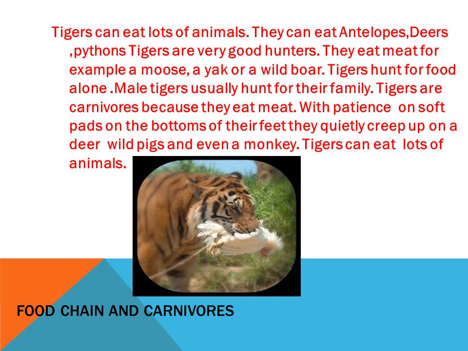 food chain and carnivores .