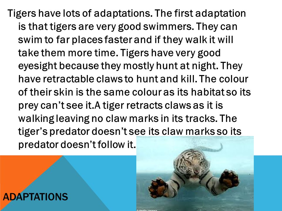 Tigers have lots of adaptations