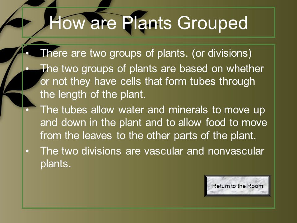 How are Plants Grouped There are two groups of plants. (or divisions)