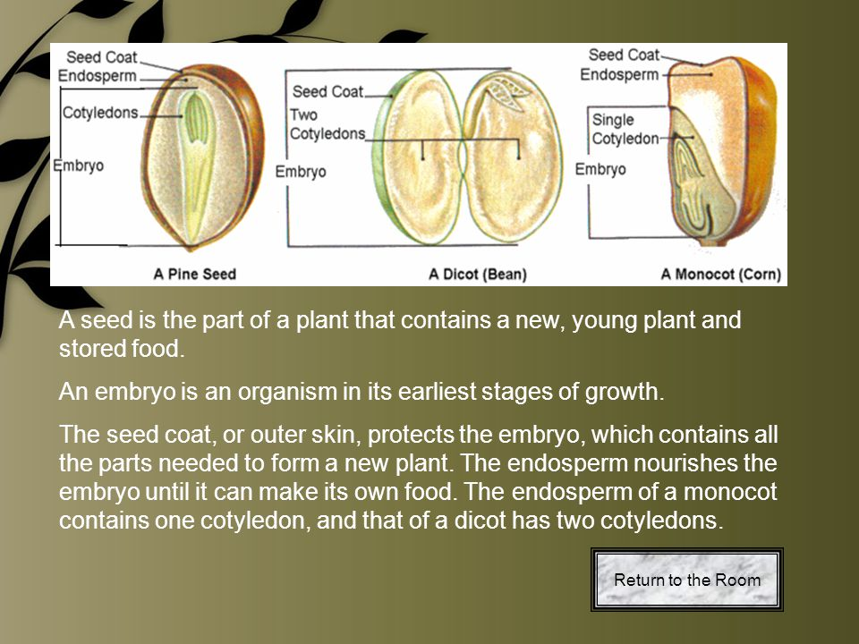 An embryo is an organism in its earliest stages of growth.