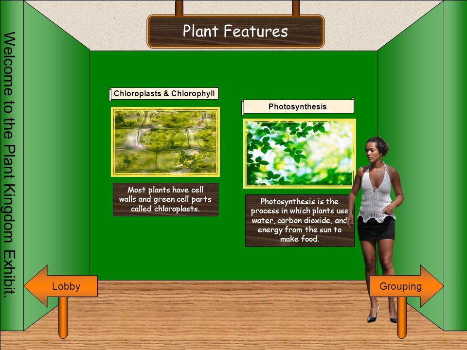 Chloroplasts & Chlorophyll