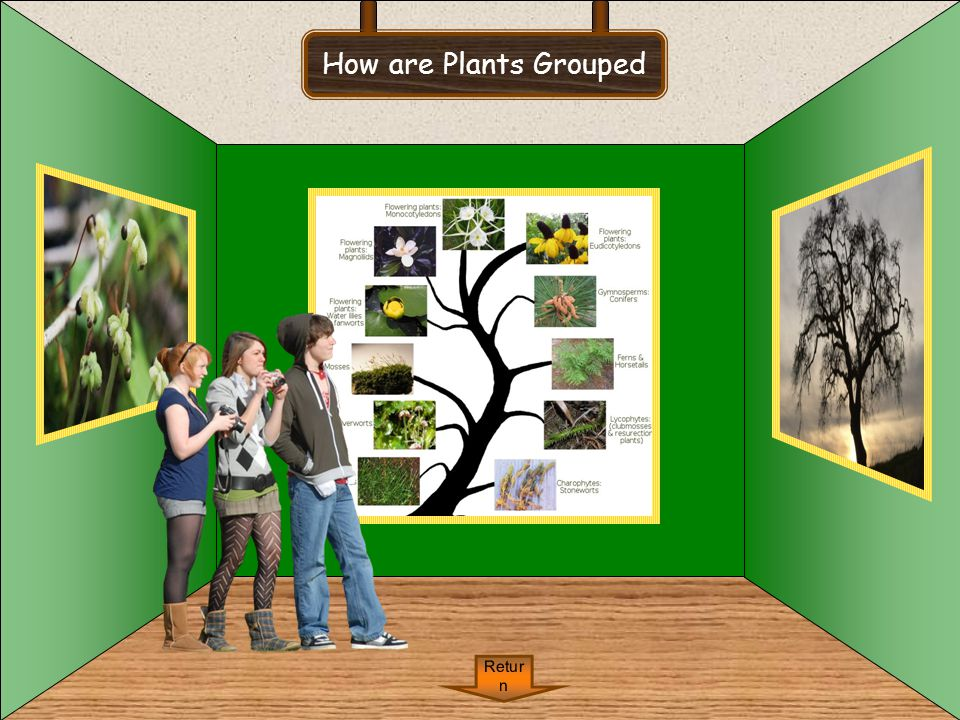 How are Plants Grouped Return