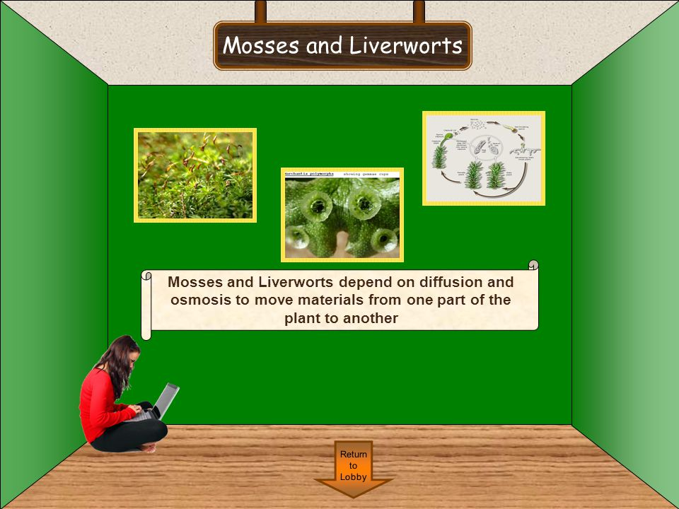 Mosses and Liverworts Mosses and Liverworts depend on diffusion and osmosis to move materials from one part of the plant to another.