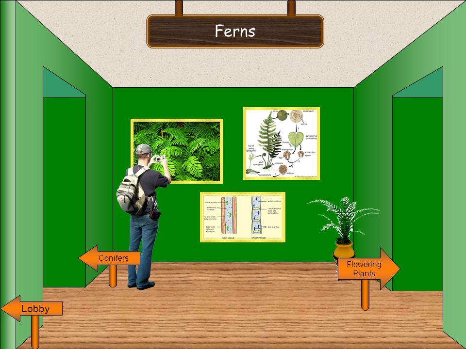 Ferns Conifers Flowering Plants Lobby