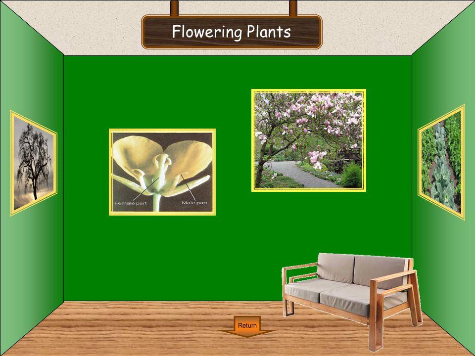Flowering Plants Return