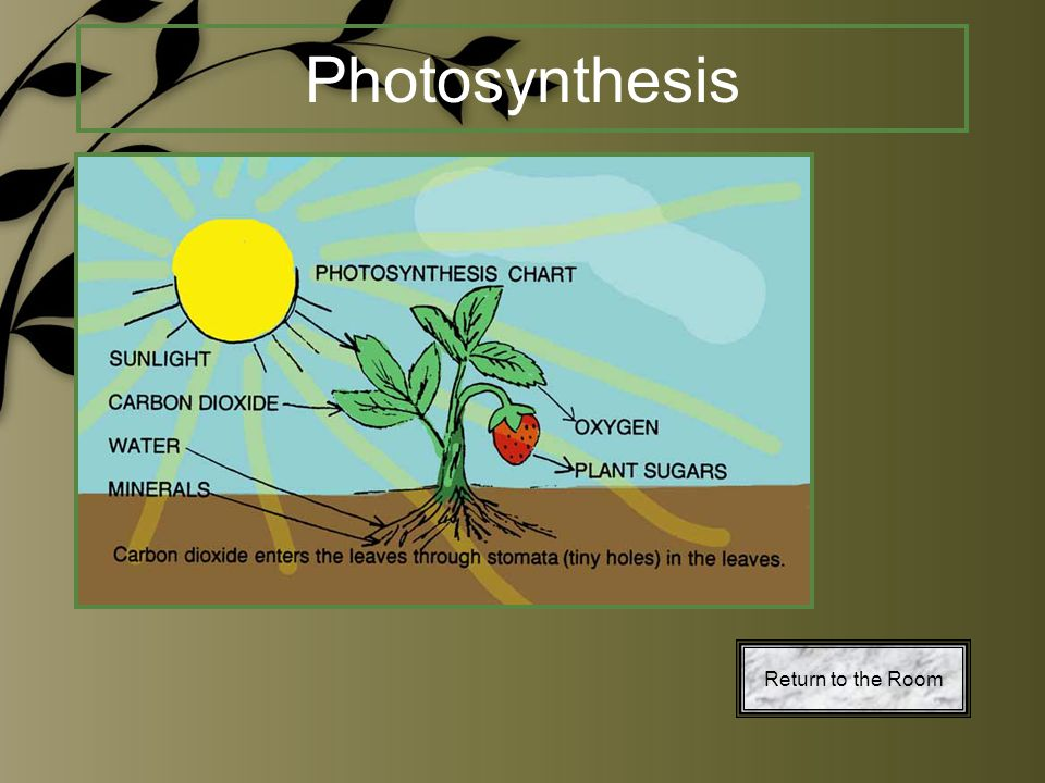 Photosynthesis Return to the Room