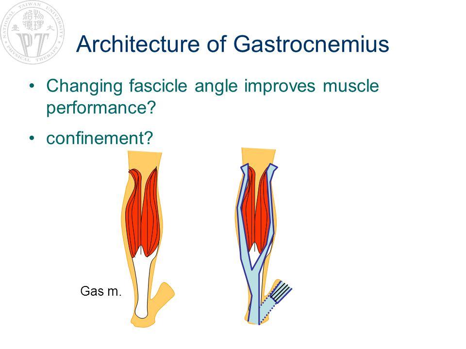 Architecture of Gastrocnemius