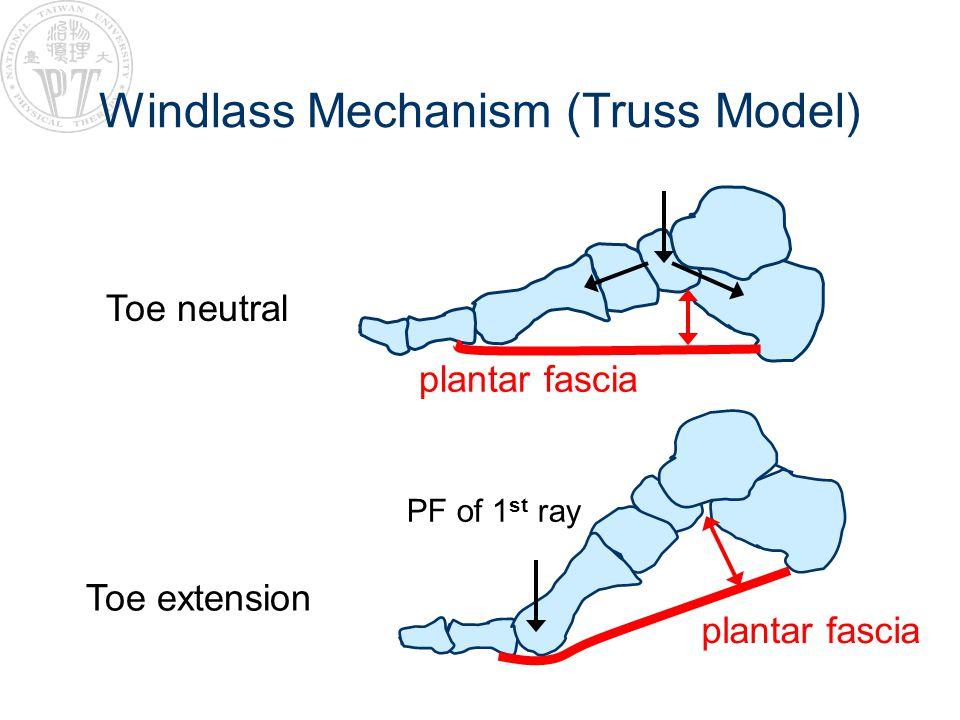 Windlass Mechanism (Truss Model)
