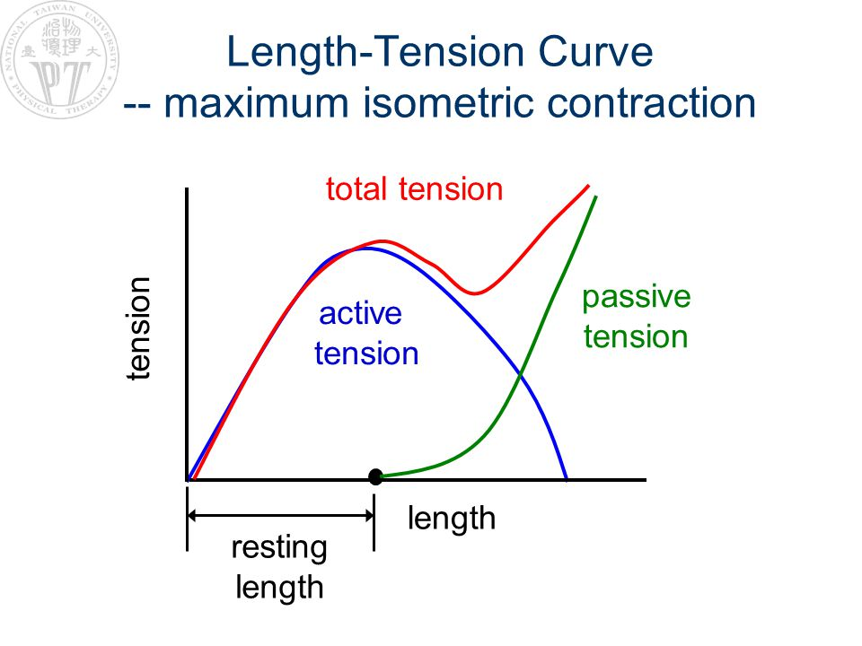 Length-Tension Curve -- maximum isometric contraction