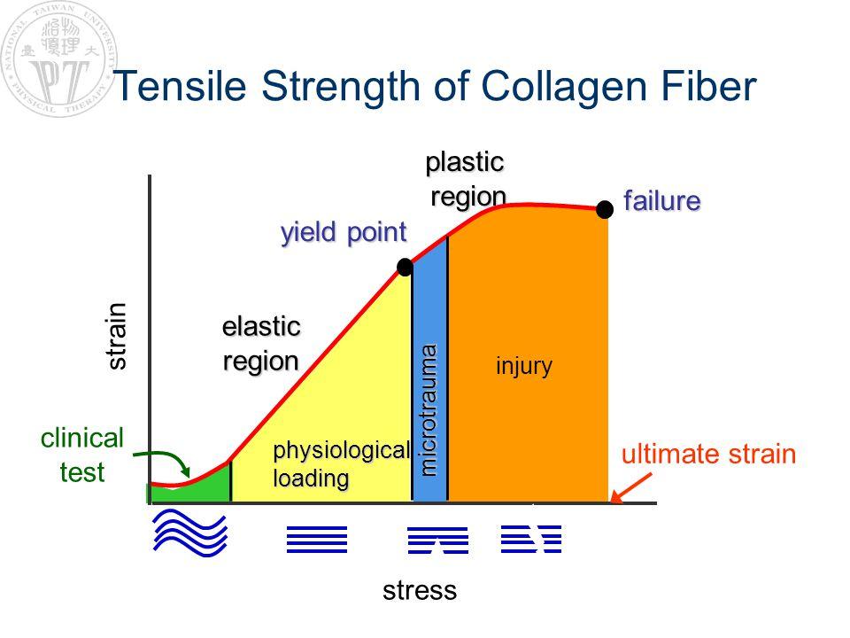 Tensile Strength of Collagen Fiber