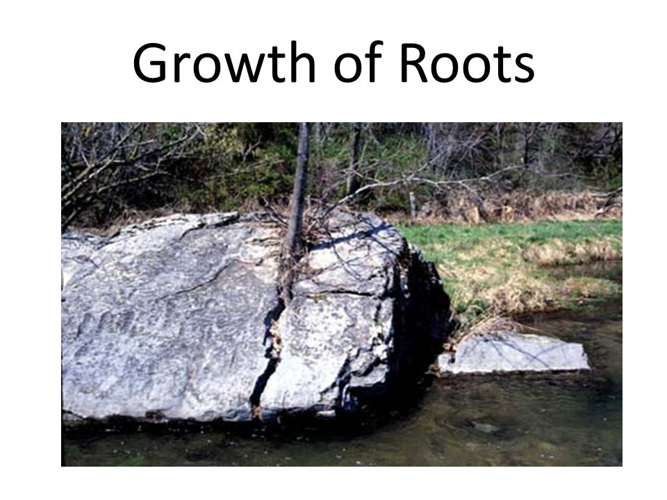 Growth of Roots