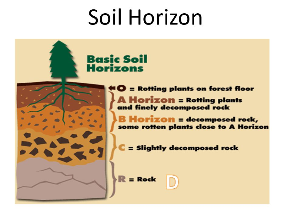 Soil Horizon D