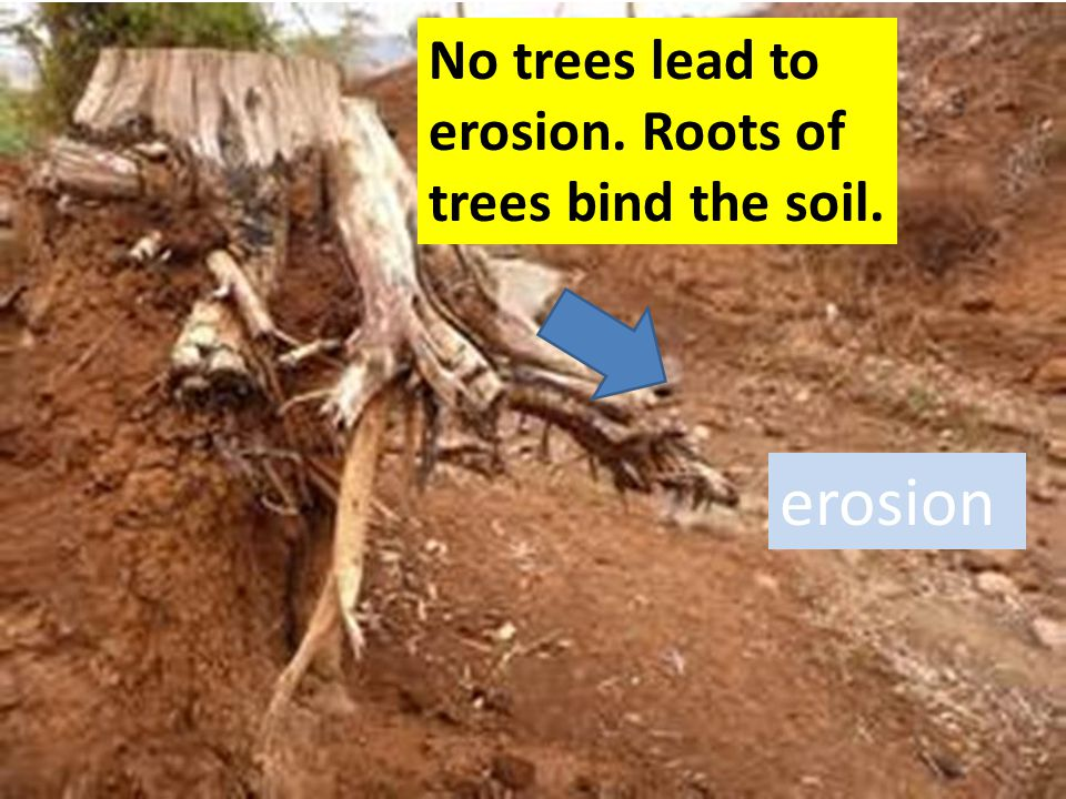 No trees lead to erosion. Roots of trees bind the soil.