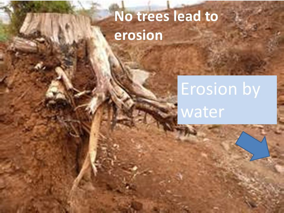 No trees lead to erosion
