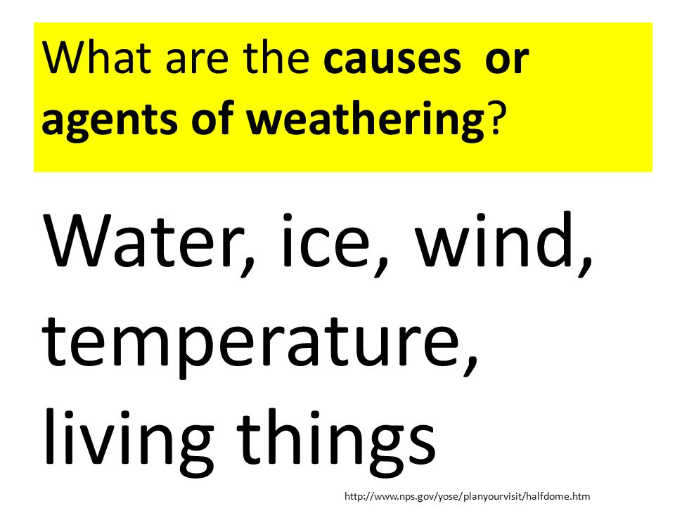 Water, ice, wind, temperature, living things