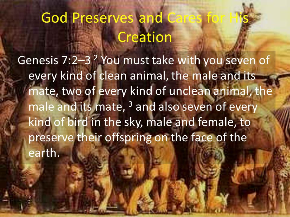 God Preserves and Cares for His Creation