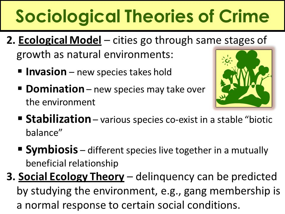 Sociological Theories of Crime