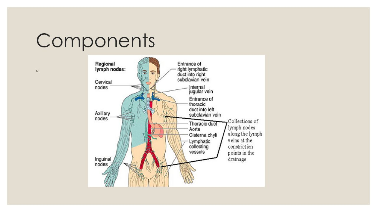 Lymphatic System And Body Defense Ppt Video Online Download