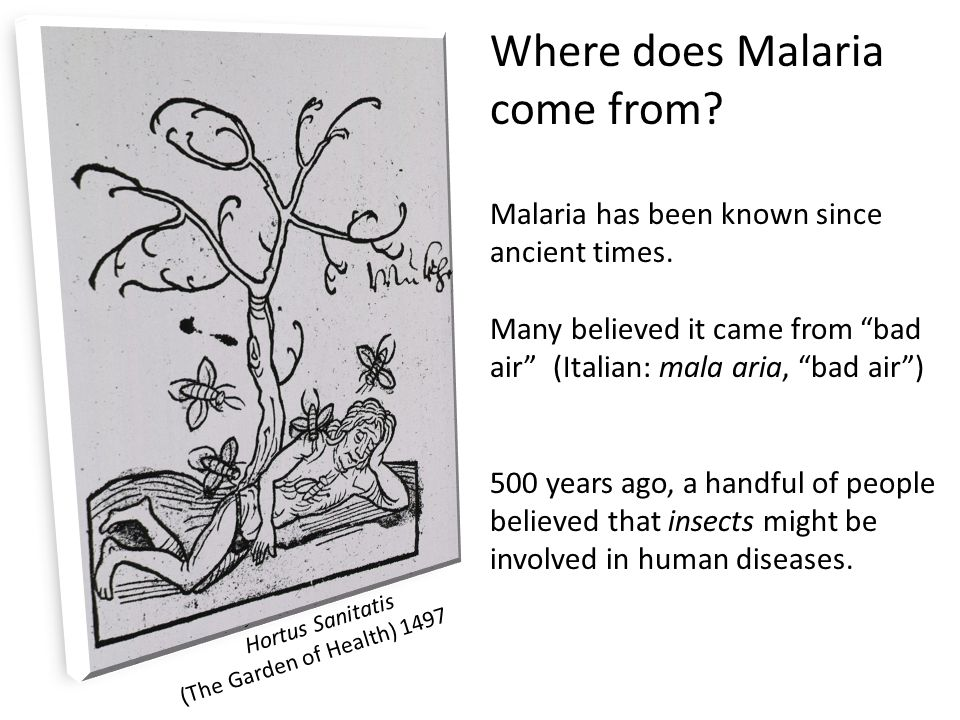 Where does Malaria come from