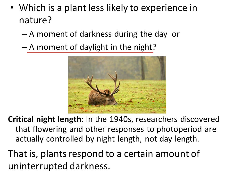 Which is a plant less likely to experience in nature