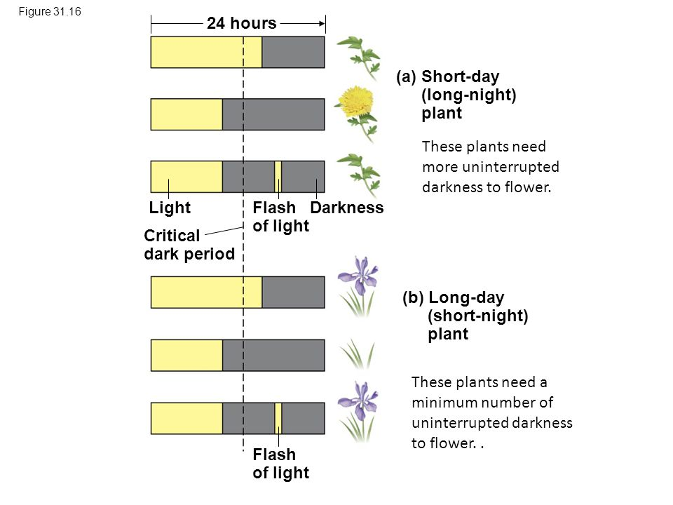 These plants need more uninterrupted darkness to flower.