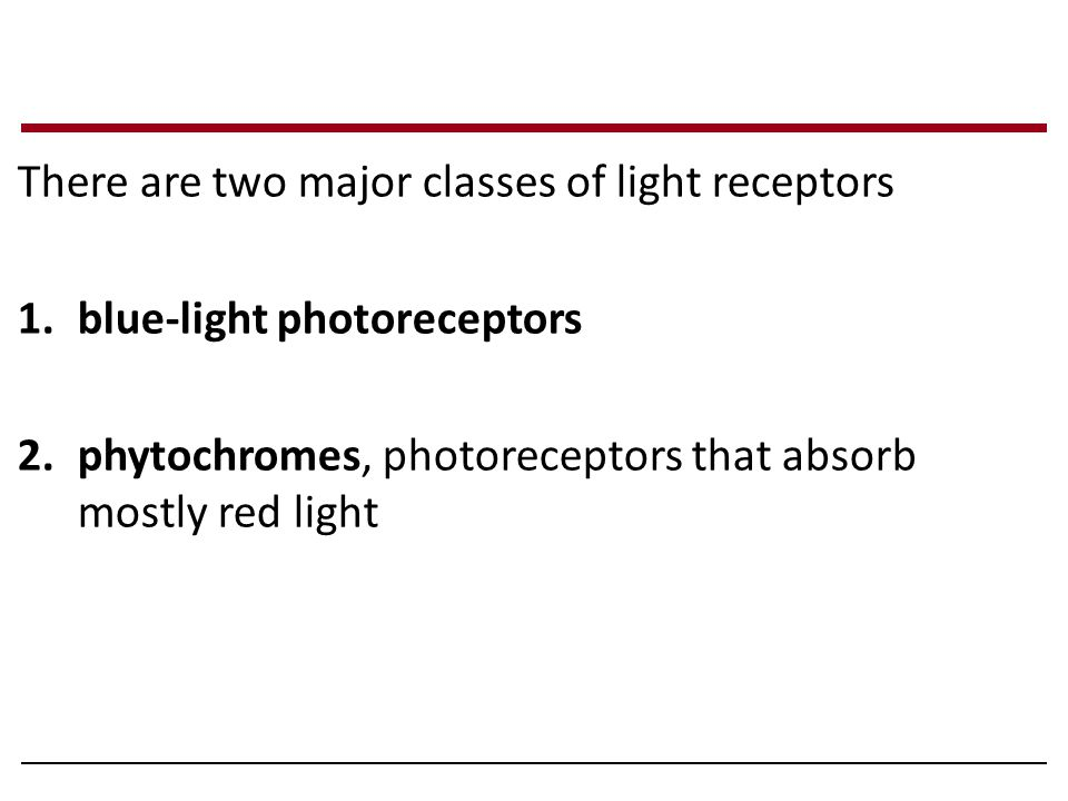 There are two major classes of light receptors