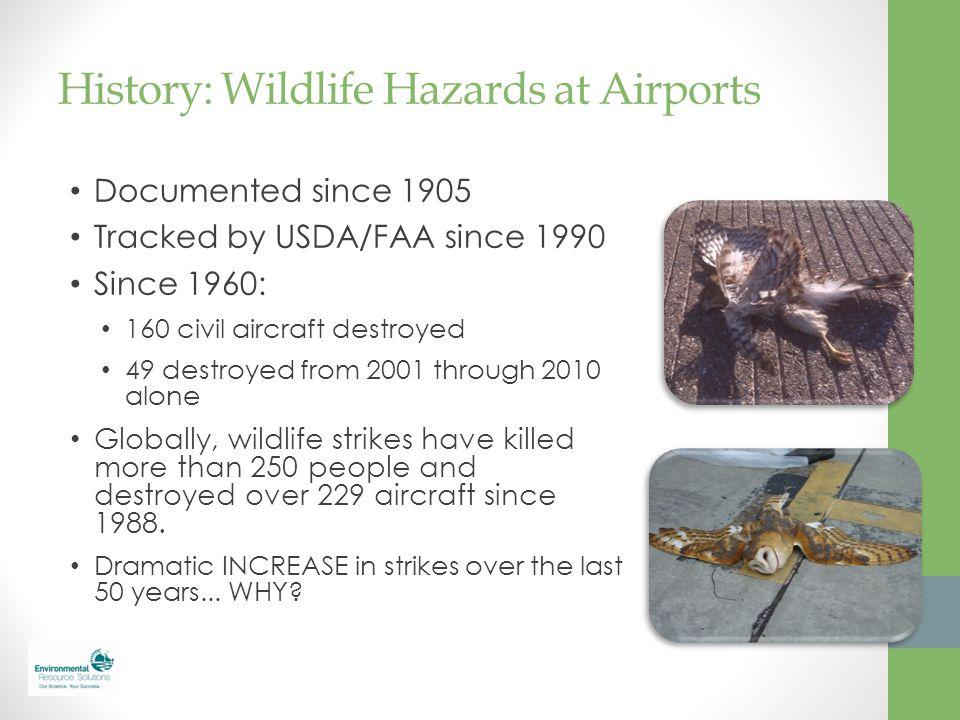 History: Wildlife Hazards at Airports