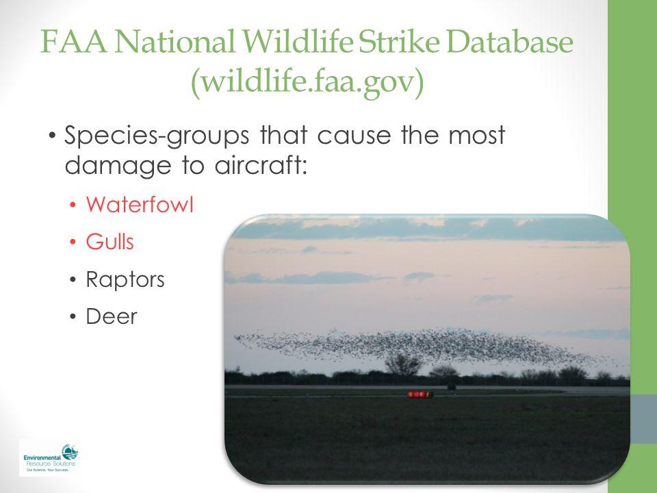 FAA National Wildlife Strike Database (wildlife.faa.gov)
